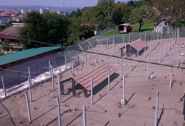 Lovni Fazani Prodaja Srbija